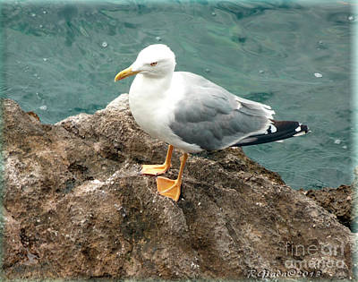The Thinker - Seagull Photography By Giada Rossi Art Print