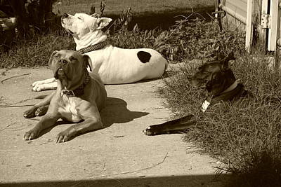 Dog Rescue Digital Art - The Three Amigos by Terry Allen