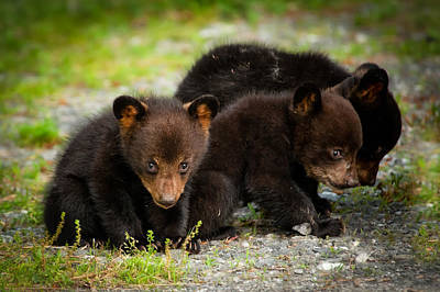 Photograph - The Three Bears by Joye Ardyn Durham