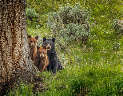 Photograph - The Three Bears  by Mark Steven Perry