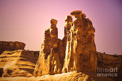 Photograph - The Three Gossips In The Light by Tara Turner