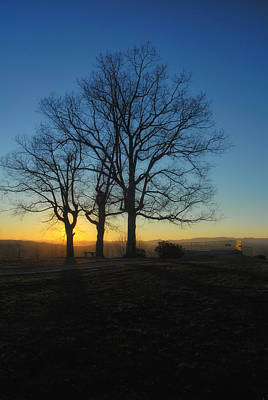 Photograph - The Three Oaks by Photography  By Sai