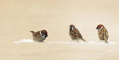 Animales Photograph - The Three Sparrows by Heike Hultsch