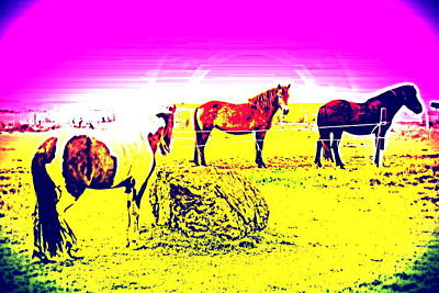 Belong Dead Photograph - The Three Young Mares Are Waiting For Anything At All To Happen   by Hilde Widerberg