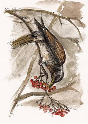 The Thrush Eating Cranberries Original by Angel  Tarantella