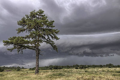 Photograph - The Thunder Rolls - Storm - Pine Tree by Jason Politte