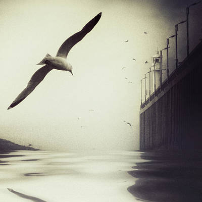 Seagull Photograph - The Tide by Piet Flour