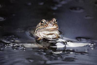 Amphibians Mixed Media - The Toad by Heike Hultsch