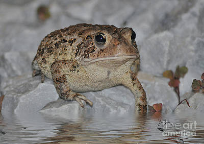 Photograph - The Toad by Kathy Baccari