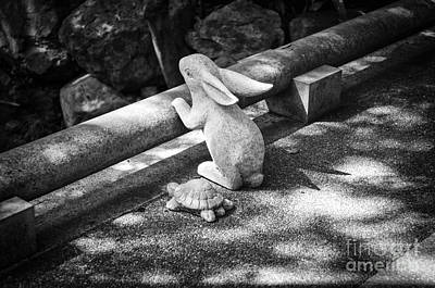 Photograph - The Tortoise And The Hare by Dean Harte