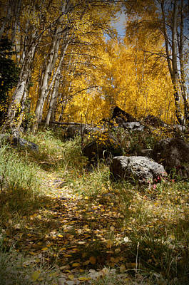 The Trail In Gold  Art Print by Meredith Mazutis