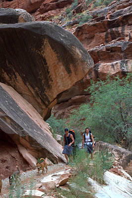 Photograph - The Trail To Supai by Jim McCain