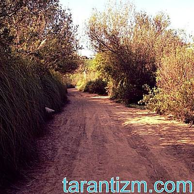 Cheap Photograph - The Trails Out Of Sheeps Hills by Tarant Photography