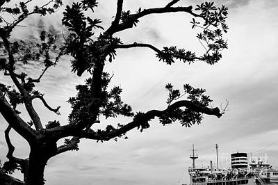 White Steamer Photograph - The Tree And The Boat by Dean Harte