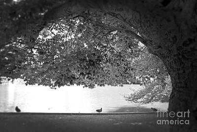 The Tree At Mill Pond Art Print by Paul Cammarata