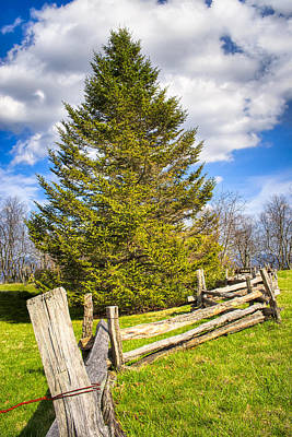 Photograph - The Tree At The Top - Brasstown Bald by Mark E Tisdale