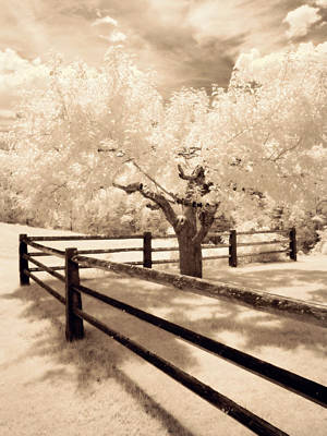 Photograph - The Tree By The Fence by Luke Moore