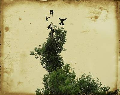 Crows Vying For Their Position In The Tree Art Print
