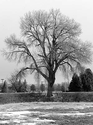 Photograph - The Tree II by MLEON Howard