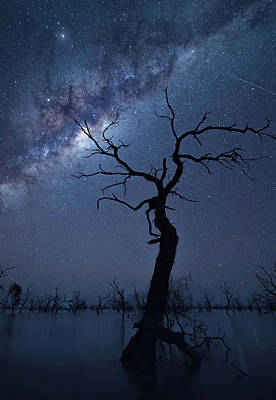 Milky Way Wall Art - Photograph - The Tree by Jingshu Zhu