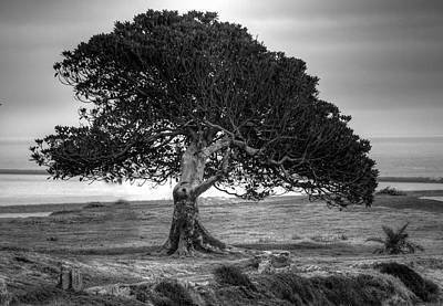 Photograph - The Tree by Judith Szantyr