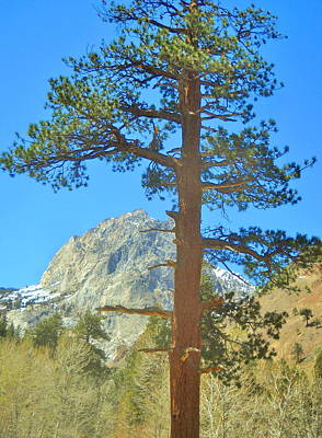 Art Print featuring the photograph The Tree by Marilyn Diaz