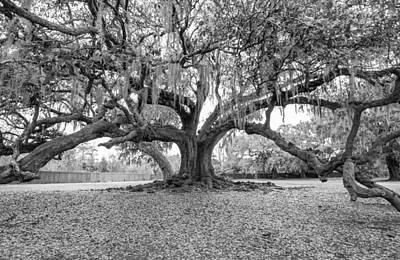 Steve Harrington Photograph - The Tree Of Life Monochrome by Steve Harrington