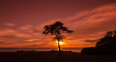 Photograph - The Tree Of Life by Tin Lung Chao