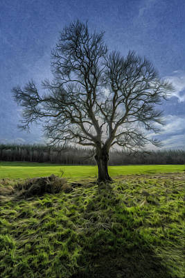 Photograph - The Tree Of Old by Terry Cosgrave