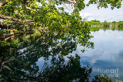 Cenote Photograph - The Tree On The Cenote by Yuri Santin