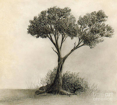 Drawing - The Tree Quietly Stood Alone by Audra D Lemke