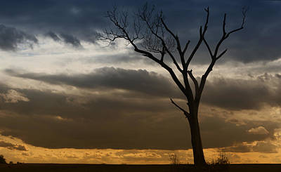 Photograph - The Tree by Ricky L Jones
