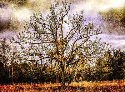 The Tree Art Print by Steven  Taylor