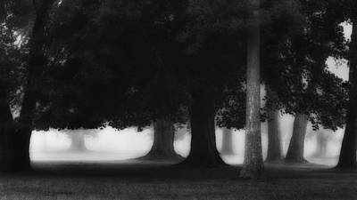 The Photograph - The Trees by Bill Wakeley