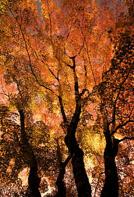 Photograph - The Trees Dance As The Sun Smiles by Don Schwartz