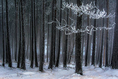 Hoar Frost Photograph - The Trees Has Horns by Dragan Lapcevic