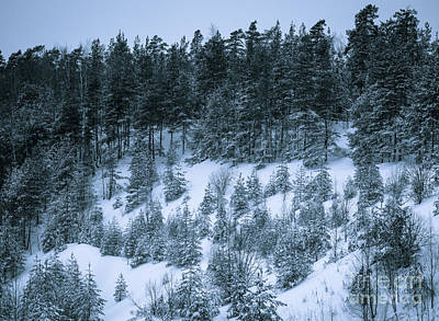 Photograph - The Trees Of The Snowy Hill by Ismo Raisanen