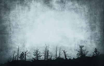Photograph - The Trees On The Ridge by Theresa Tahara