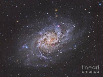 The Triangulum Galaxy Print by Reinhold Wittich