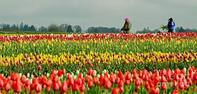 The Tulip Harvesters Art Print by Nick  Boren