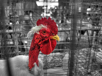 Chicken Photograph - The Tulsa State Fair 2014  P1 by John Straton