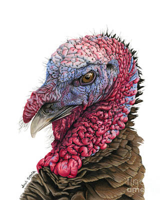 North American Wildlife Painting - The Turkey by Sarah Batalka