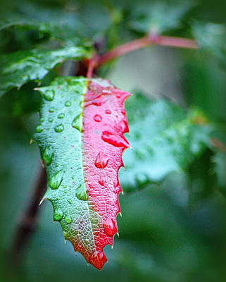 Photograph - The Turning Of The Leaf by AJ  Schibig