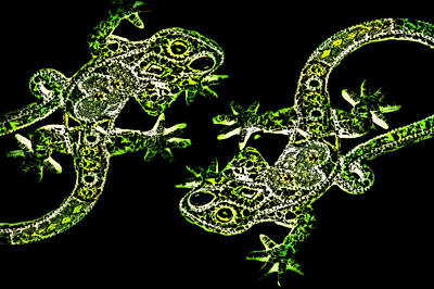 Digital Art - The Two Lizards by Selke Boris