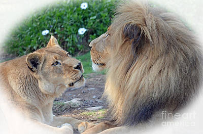 Photograph - The Two Love Birds Lion And Lioness by Jim Fitzpatrick