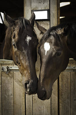 Photograph - The Two Of Us by Lesley Rigg