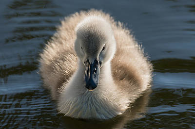 Photograph - The Ugly Duckling by Michael Mogensen
