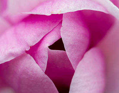 Photograph - The Unfolding Of Spring by Kunal Mehra