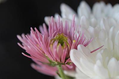 Unique Photograph - The Unique Flower by Stella Robinson