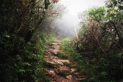 Inspriation Photograph - Light The Path by Daniel  Gundlach